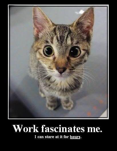 image cat meme work