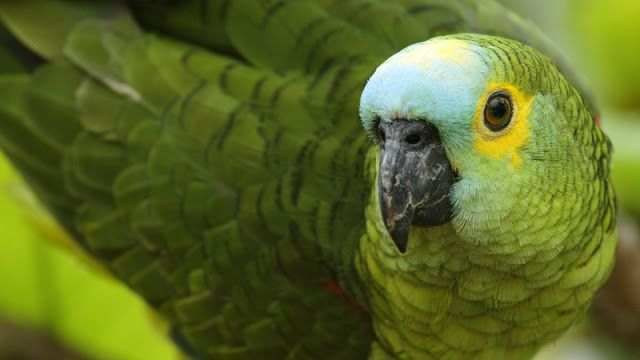Parrots Widescreen Wallpapers Inspirational top 47 Most Dashing and Beautiful Parrot Wallpapers In Hd
