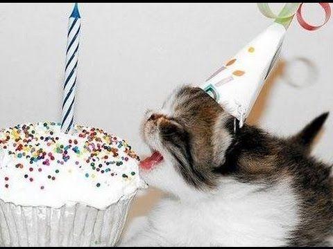 Cute Kittens Funny Cat Happy Birthday Video