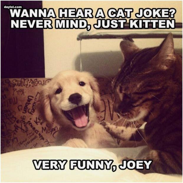 Related Evil Joke Cat Meme Quickmeme Picture to pin