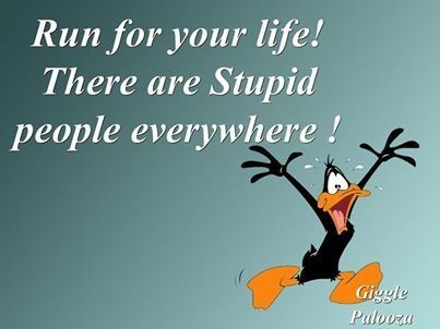 stupid people everywhere funny quotes quote funny quote funny quotes looney tunes daffy duck humor