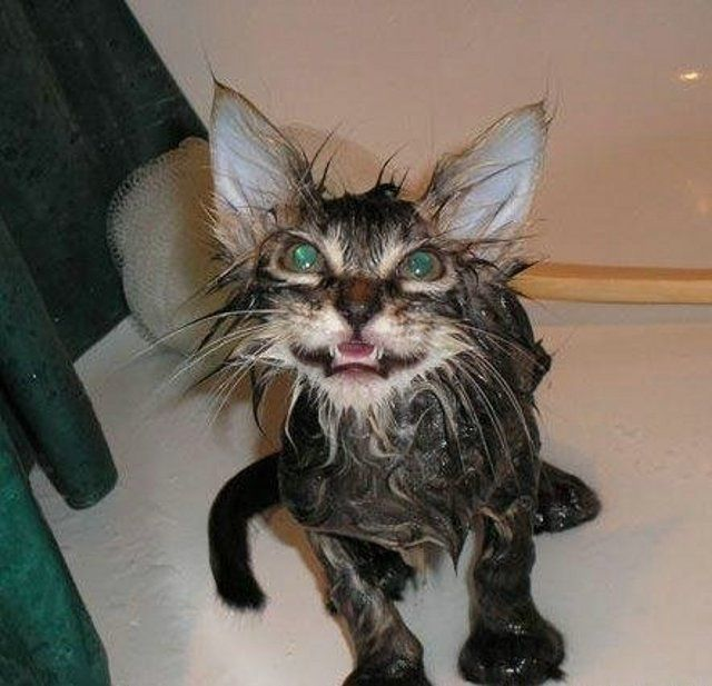 1 Funny Wet Cats