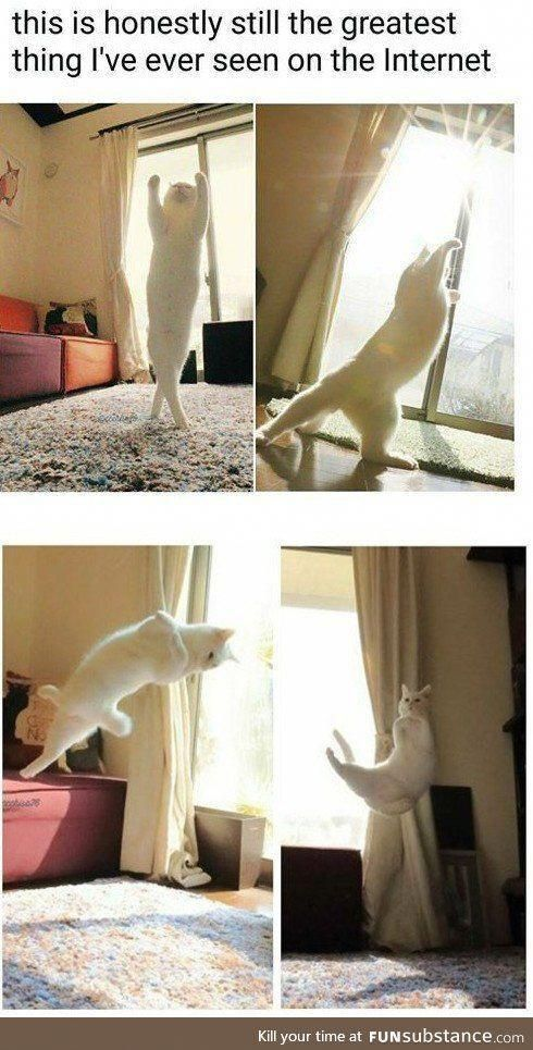 Cat yoga That s why people call one of the yoga poses the downward facing cat or something catmemes
