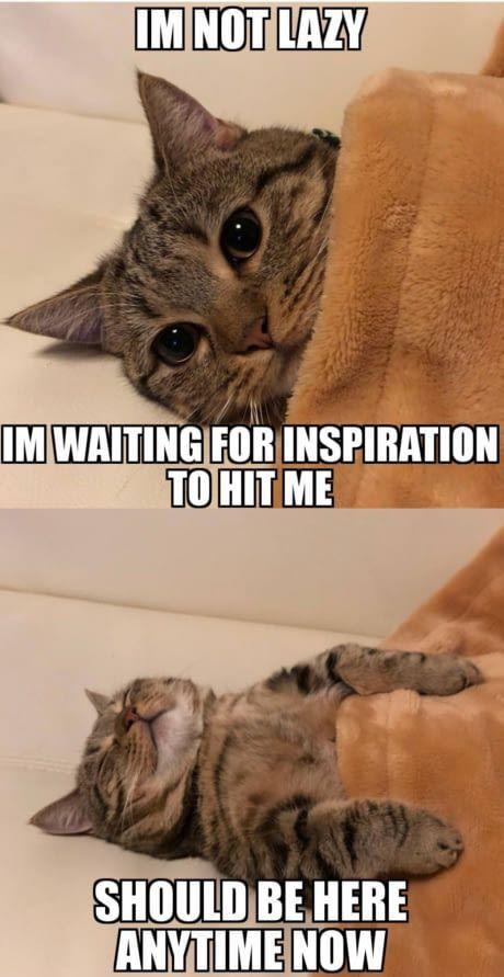 Life am I right Funny Animal Kitty Cat Funny Animal Quotes