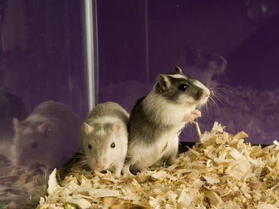 Furry Little Fellows Cute Names for Pet Gerbils