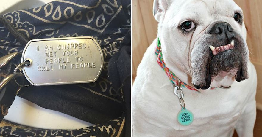 funny collar tags 18 6051