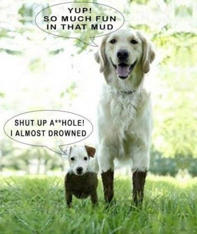 Hilarious Dog Joke – LOL Jokes R Us