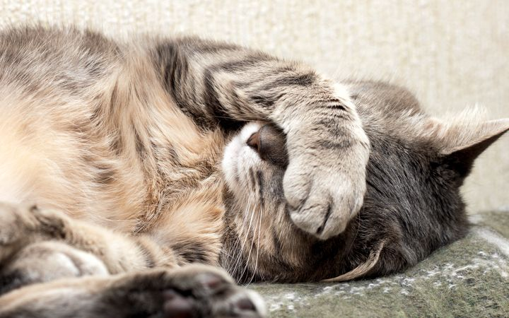 If step 3 didn t work try to make your pet puke You can use hydrogen peroxide to induce vomiting — use one teaspoon per 10 pounds on your pet