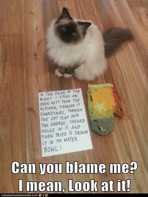 blame cat shaming shame mitt gross ugly Cats captions
