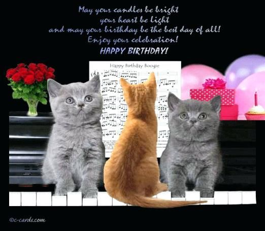 Find the Beautiful Printable Funny Cat Pictures