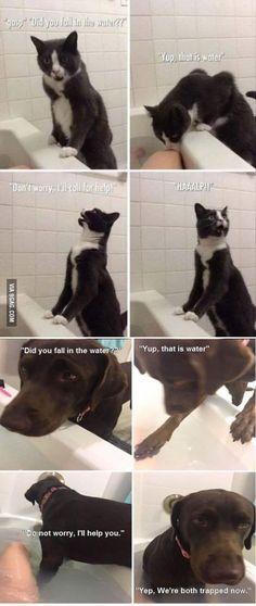 Good intentions Hilarious Animal MemesCute