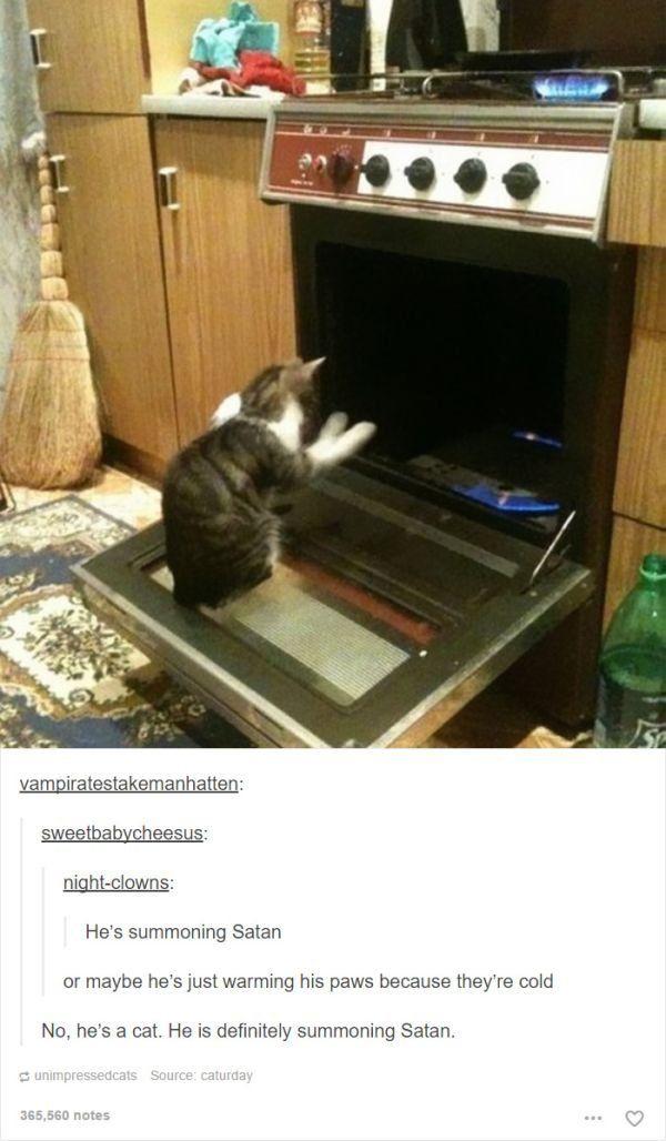 tumblr is a goldmine for cat captions 35 photos 226 Tumblr has a Ph D