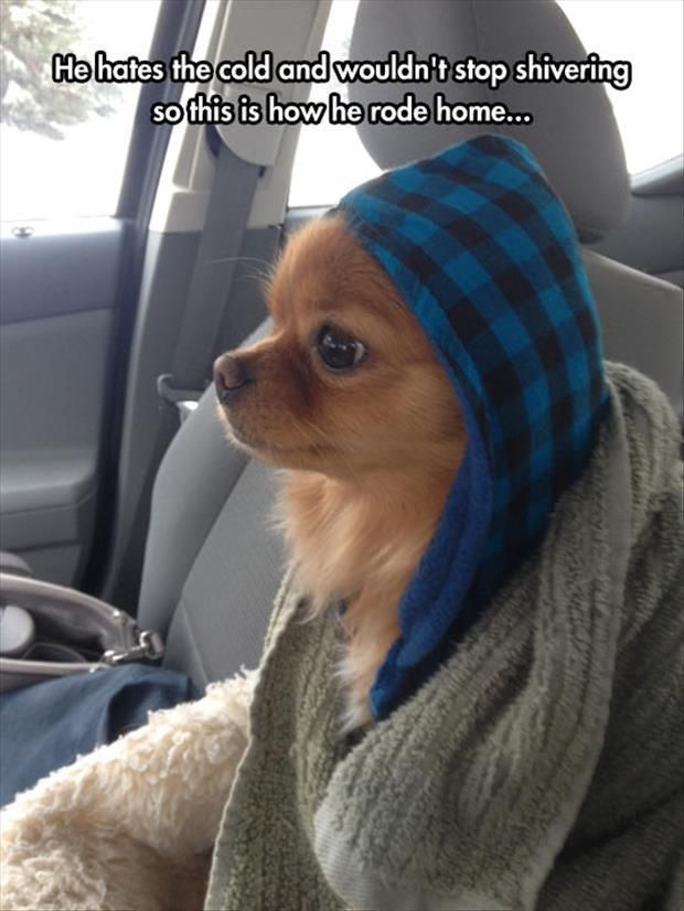 Dump A Day Funny Animal The Day 25 Pics