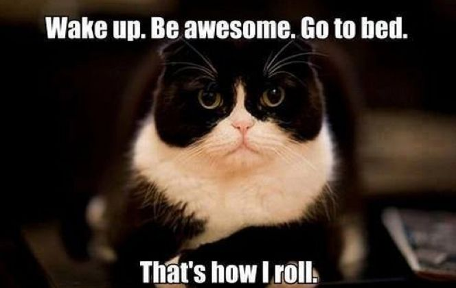 Find the Fascinating Funny Weird Cat Memes