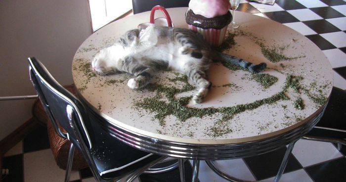 128 Times Cats Found Catnip And Cat exe Stopped Functioning