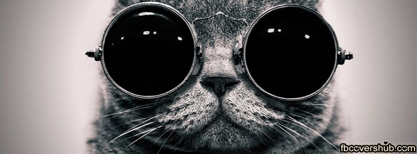 Funny Fat Cat with Glasses Fb Cover