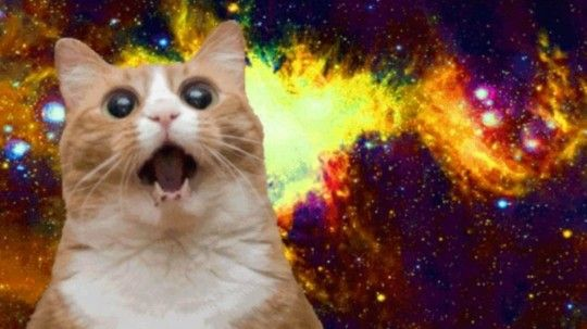 15 best cat memes ever meow 3283dd863e 540x303