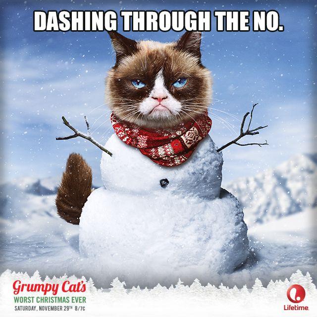 Lifetime Grumpy Cat Movie Catvent Grumpy Cat Movie Grumpy Cats Grumpy Cat