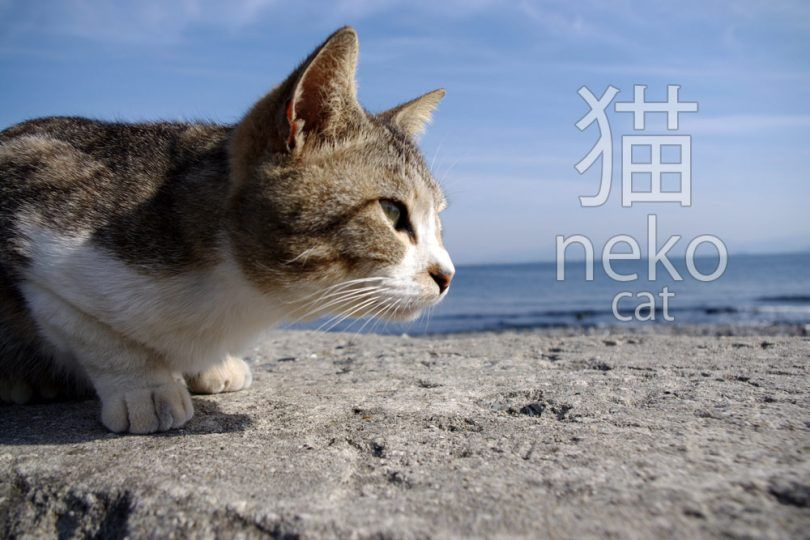 funny cat expressions and phrases in japanese 810x540