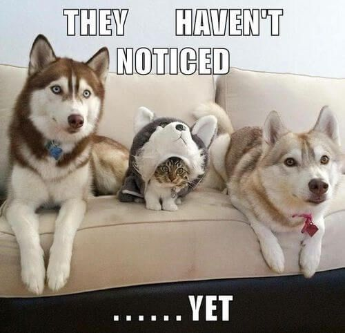 dog and cat memes 35