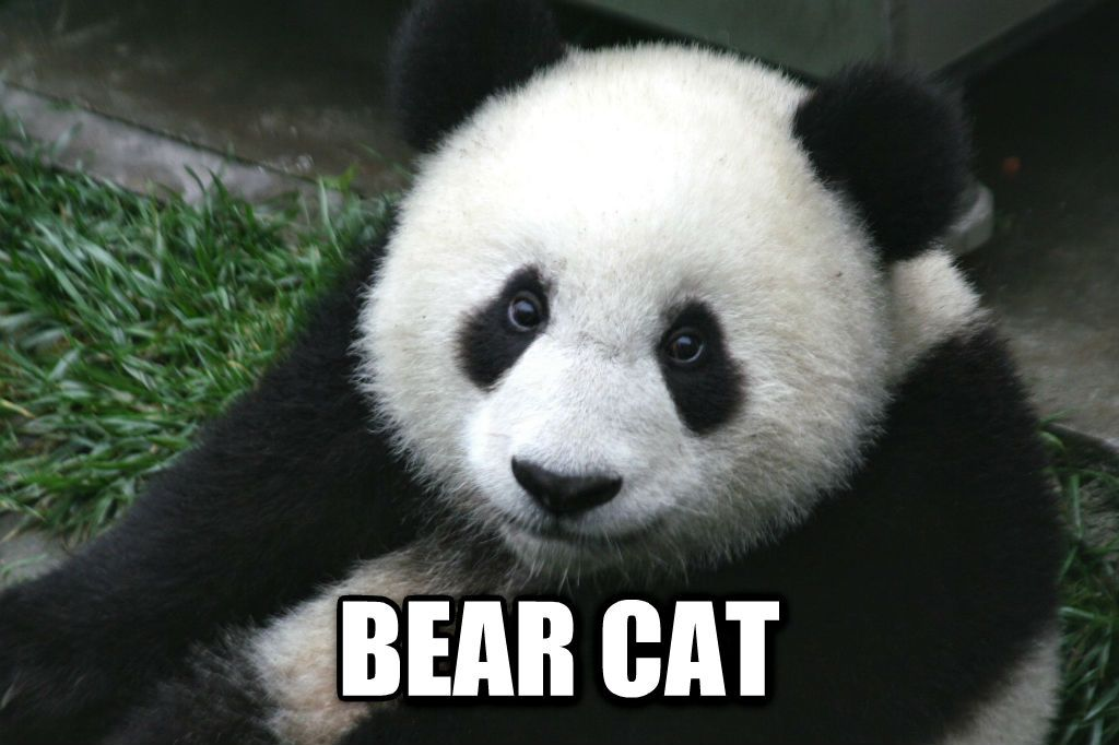 Chinese words for animals translated into English inspired by recent post on German animal names Album on Imgur