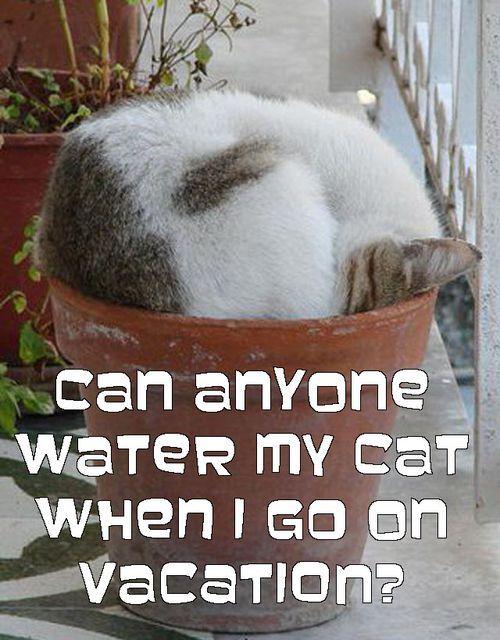 water my cat plant cat meme