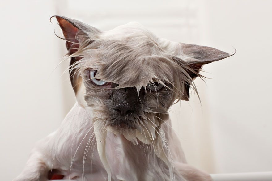22 Hilarious pictures of Wet Cats source