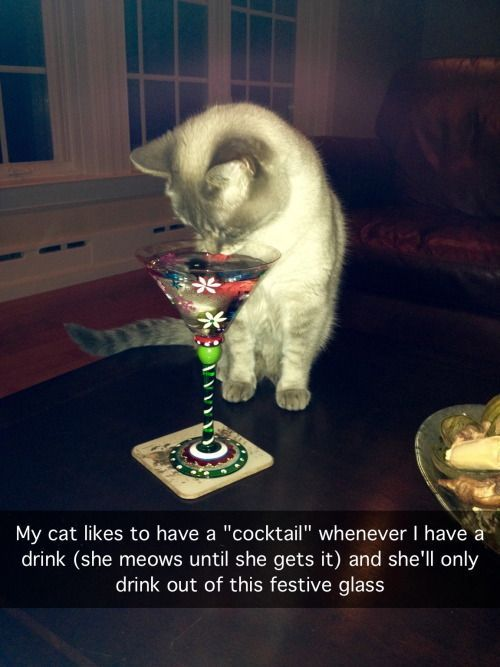 42 Funny Cats To Brighten Up Your Day