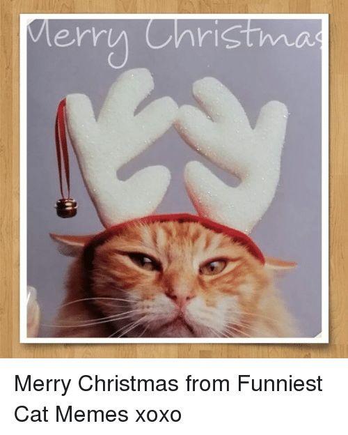 Christmas Memes and Merry Christmas Merry Christma Merry Christmas from Funniest Cat Memes