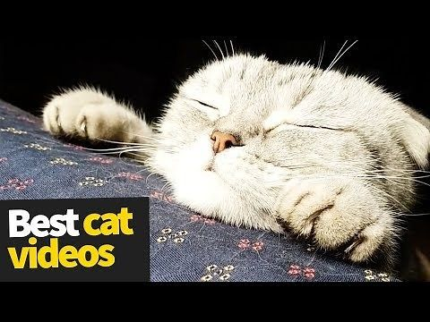 The Funniest and Most Humorous Cat Videos Ever Funny Cat pilation Cats are