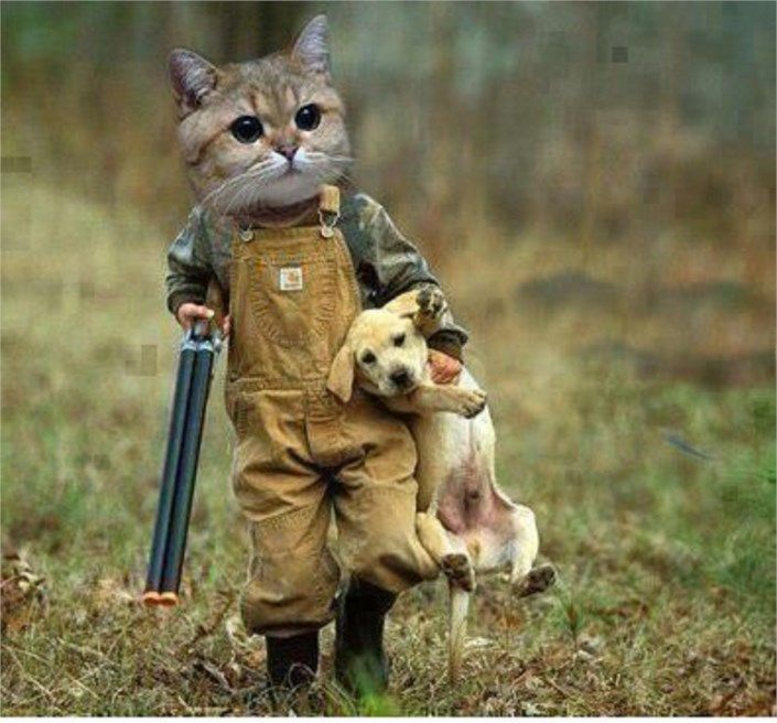 funny cat as a hunter carrying 4765