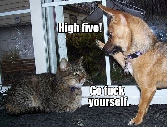 High Five Go Fuck Yourself Funny Dog And Cat Image