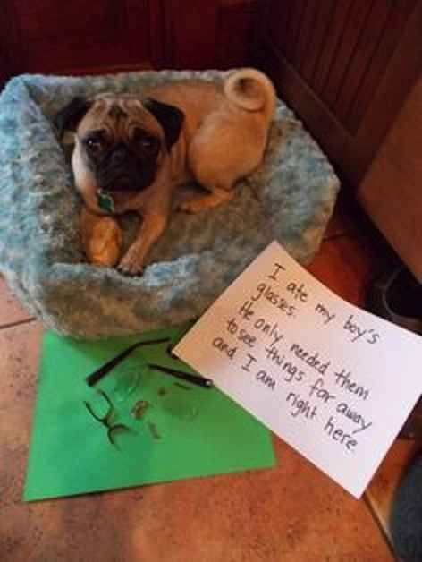 23 s That Prove Pug Shaming Is The Best Kind Dog