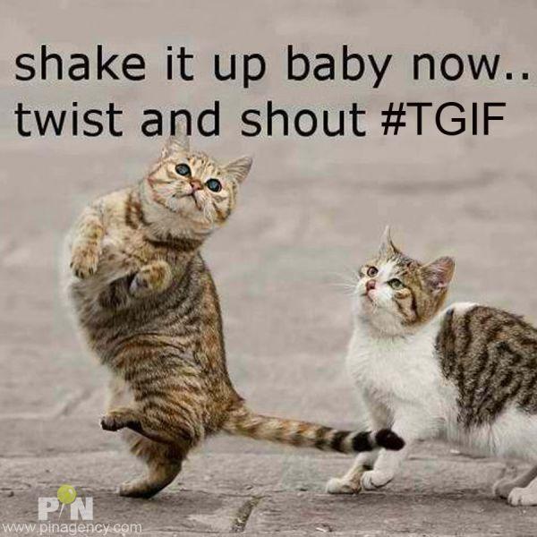 Funny TGIF Cat Friday