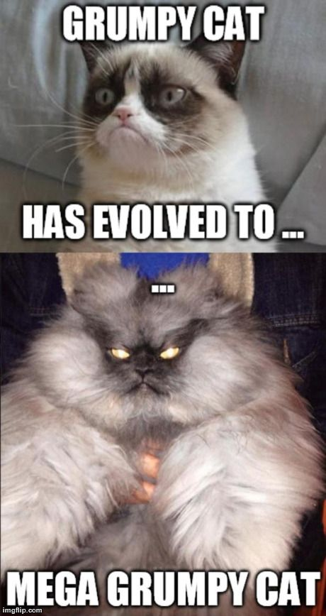 grumpy cat has evolved to mega grumpy cat