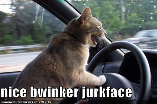 Cat with Rubik s Cube OMG WTF · Driving Cat Nice Bwinker Jurkface