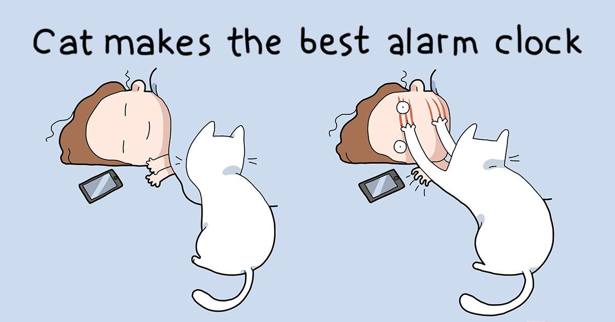funny cat behavior adventages cartoon lingvistov fb