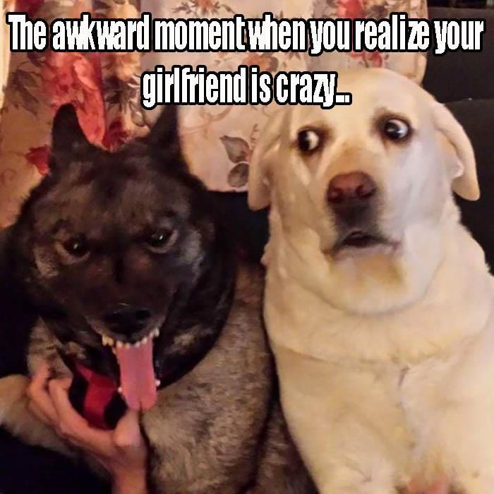 Find the Marvelous Funny Animal Faces with Memes