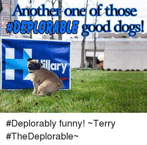 Memes °Å¸¤– and Dog othe one of those od dogs illary