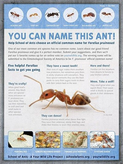 A mon name for a mon ant