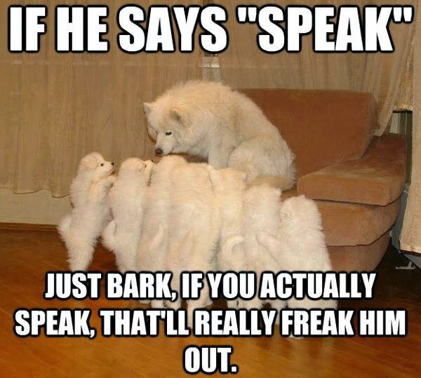 30 Funny animal captions p 17 30 Amazing