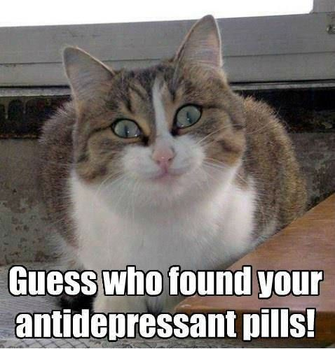 Weird Cat meme Antidepressant Guess