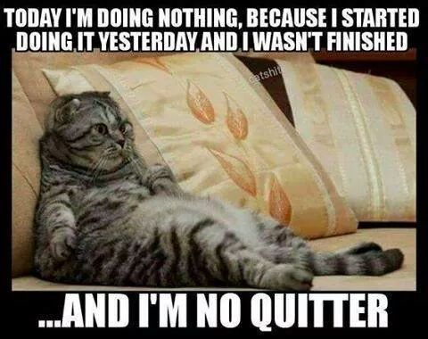 Hard working cat doing nothing because I m no quitter
