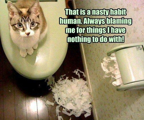 cat toilet paper