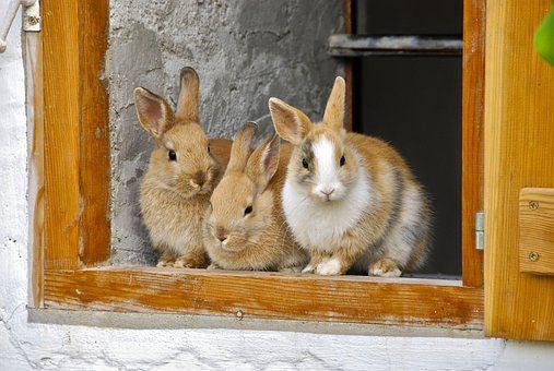 Rabbit Farm Window Cute