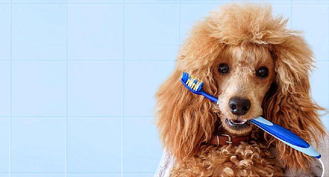 650x350 how to brush dogs teeth slideshow