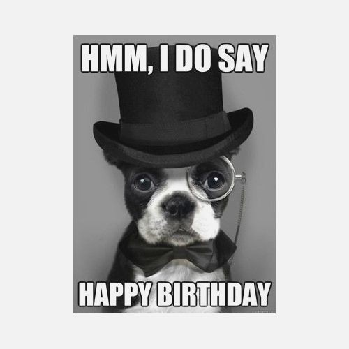 happy birthday meme dog funny