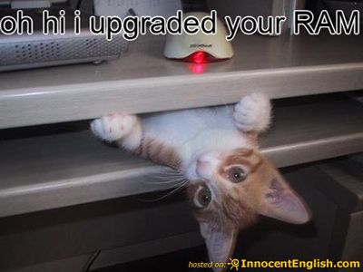 Today s cute or funny animal pictures March 7 2011