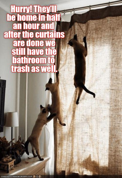 trash curtains bathroom caption hurry Cats
