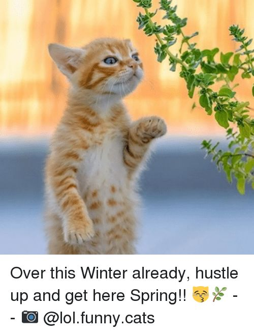Funny Cat Site Memes Spring and 🤖 Over this Winter already hustle up and